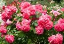 Moim zdaniem (8) Kwiaty