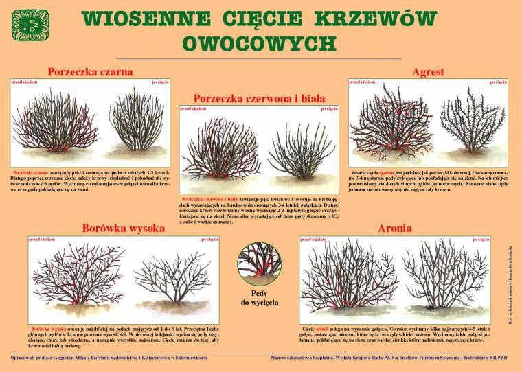 Wiosenne Cięcie Krzewów Owocowych Polski Związek Działkowców
