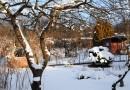 Zimowe problemy roślin
