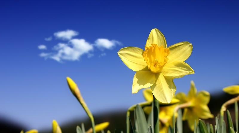 wiosna-tapeta
