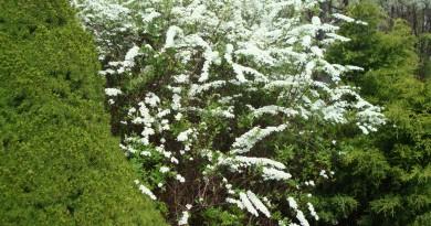 Wiosna 2014 020