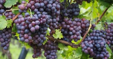 wine-berries-694196_640