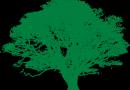 Komunikat Krajowej Rady PZD dot. zasady wycinki drzew i krzewów od 1 stycznia 2017 r.
