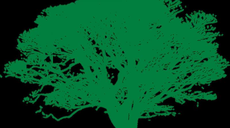 tree-307149_960_720