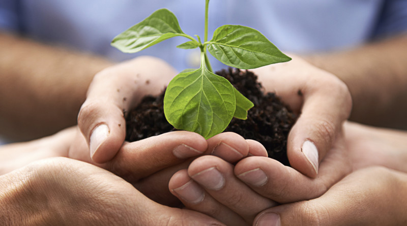 A cropped image of a hands holding a plant growing in earth