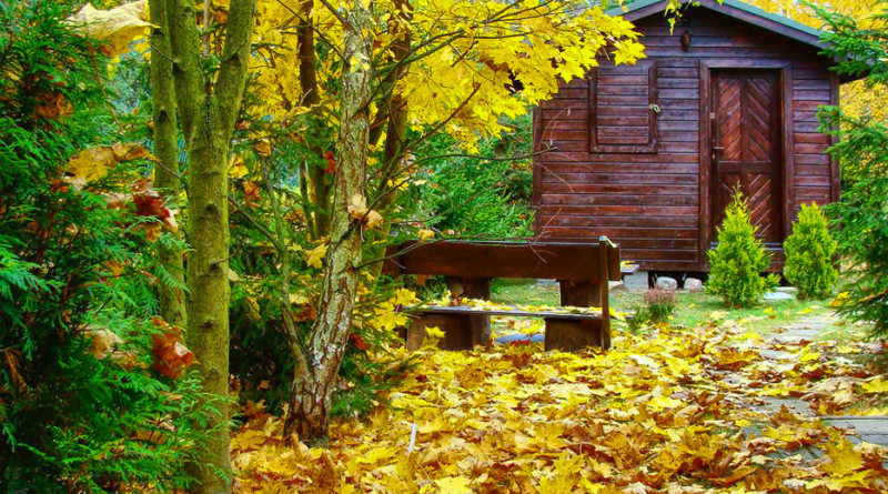 6380826_jesien-na-lesnej-dzialce