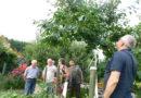 Letnie cięcie drzew w Kędzierzynie-Koźlu